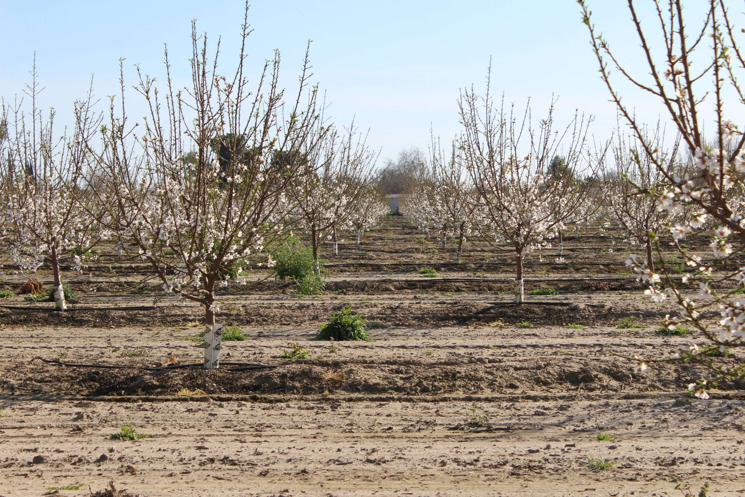 20.59 Acres Almonds, Dinuba