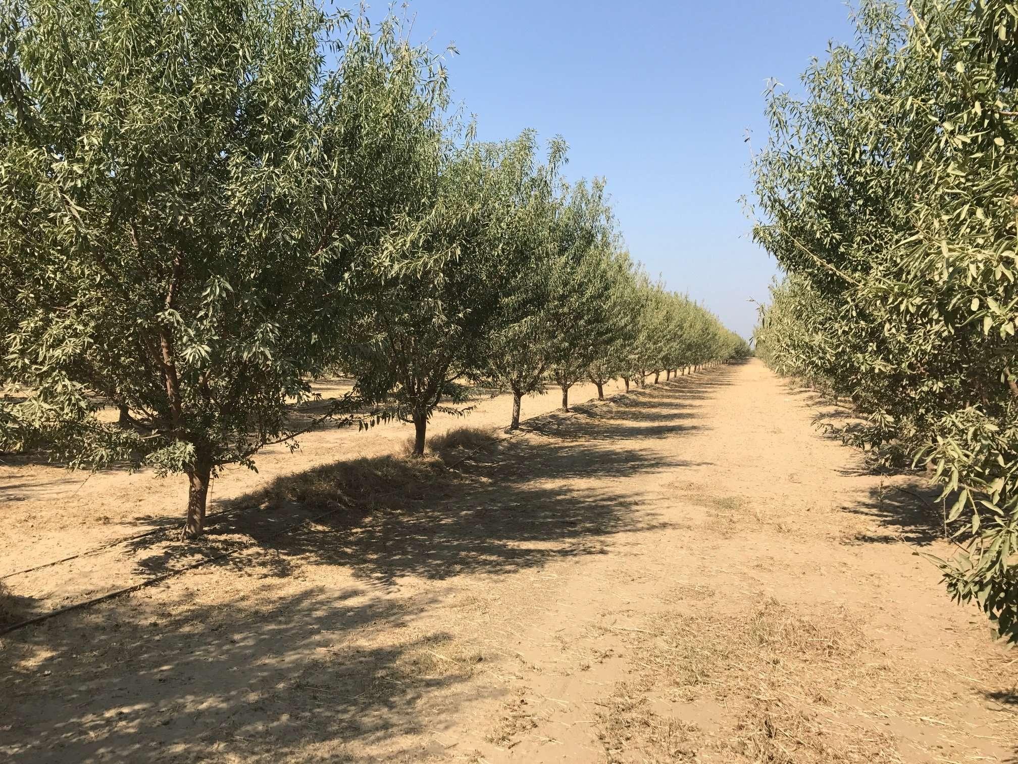 20.59 Acres Almonds, Dinuba