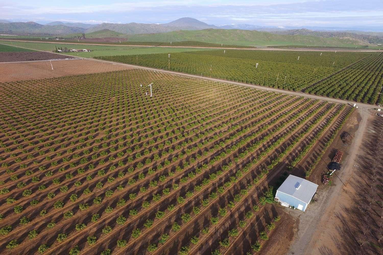 35.53 Acres Citrus, Reedley
