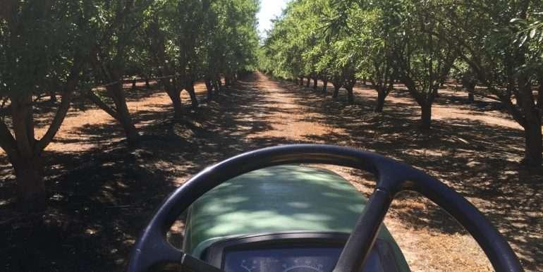320 Ac. Almonds