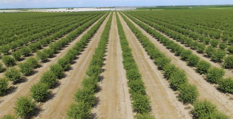 453.16 Acres Almonds, San Joaquin