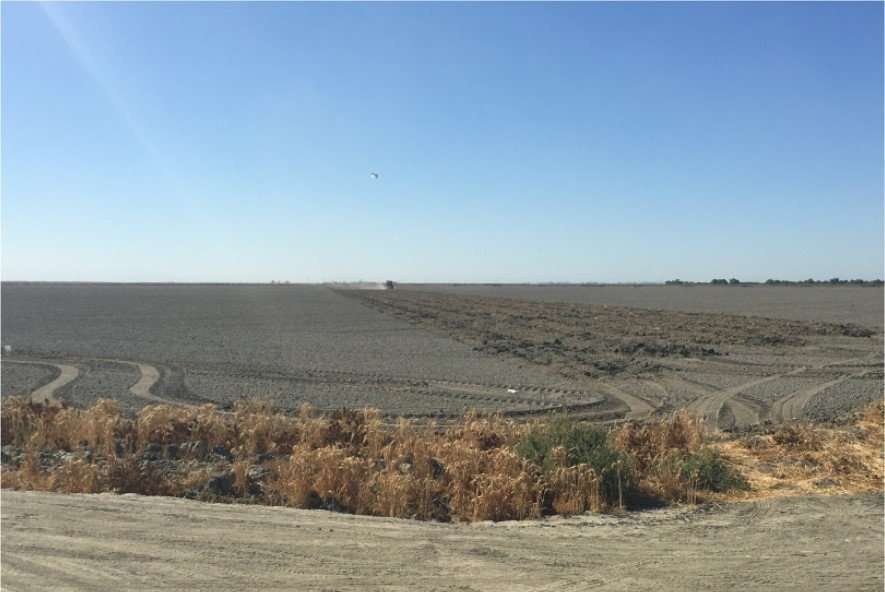 320 Acres Row Crop, Corcoran