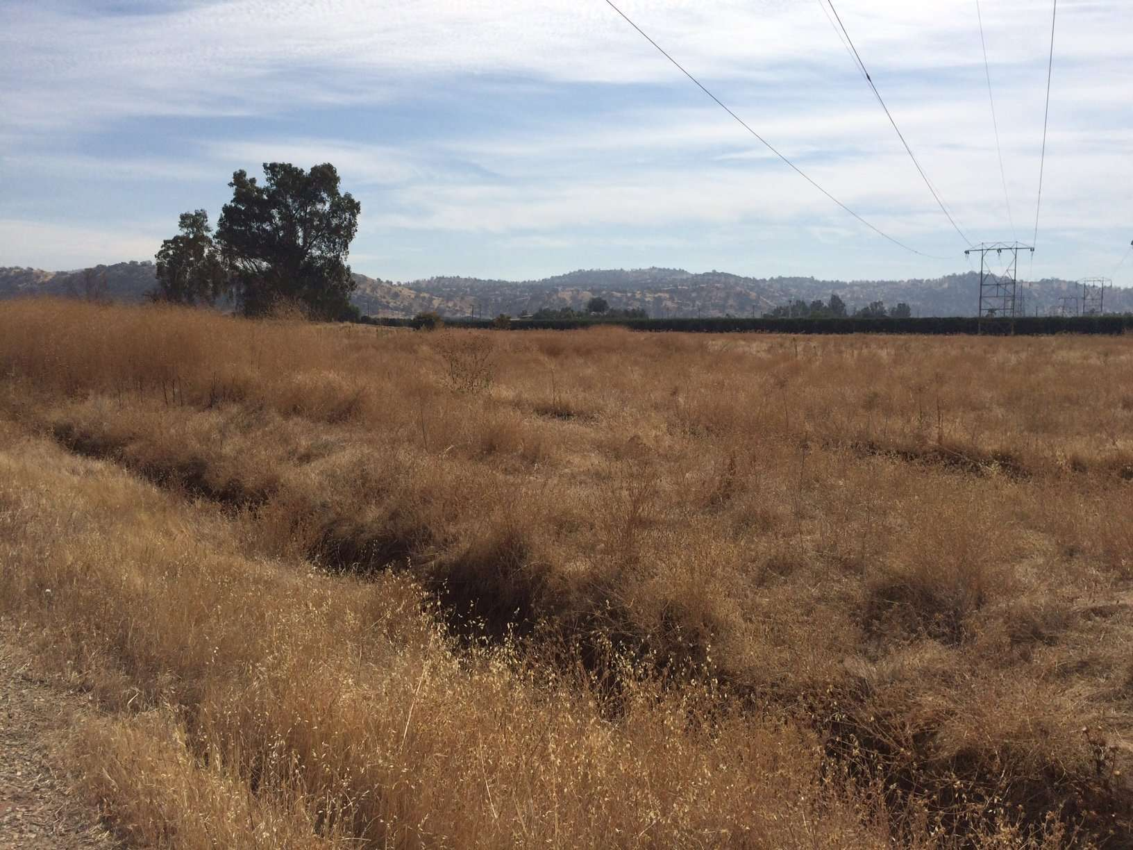 13.53 Ac. Open Land, Reedley