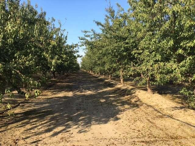 21 Acres Almonds/Prime Development Property, Selma