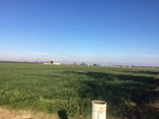 38.35 Acres Open Land, Kingsburg