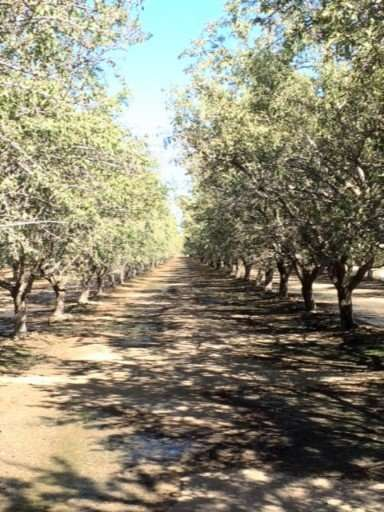 160.31 Acres Almonds, Kern County