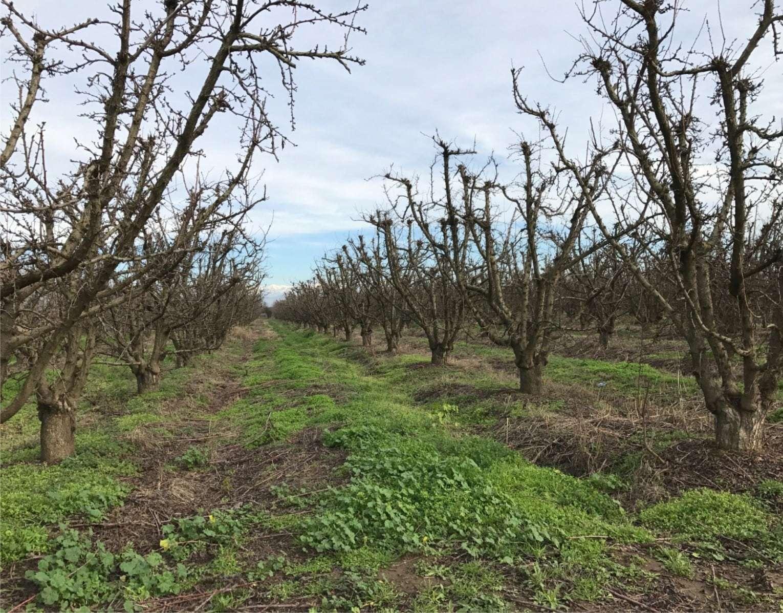 17 Acres Tree Fruit & Open Dinuba