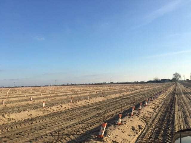 38.18 Acres Newly Planted Almonds, Fresno