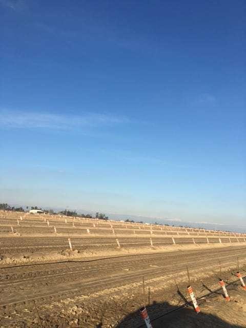 30.84 Acres Newly Planted Almonds, Fresno