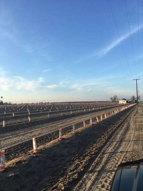 80 Acres Newly Planted Almonds, Fresno