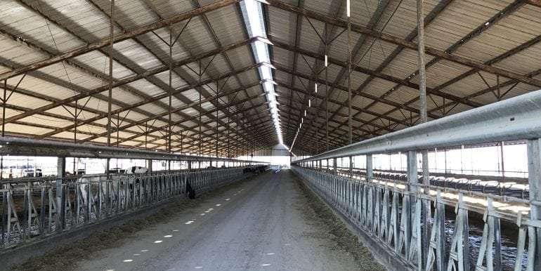 Goldthwaite Dairy Freestall