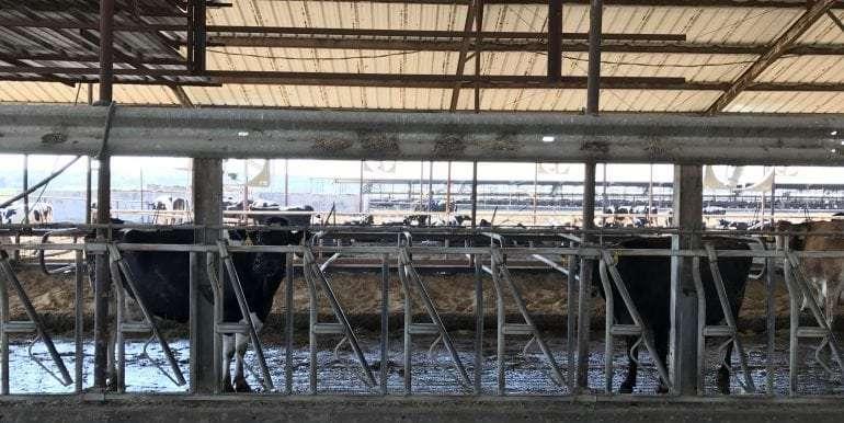 Goldthwaite Dairy