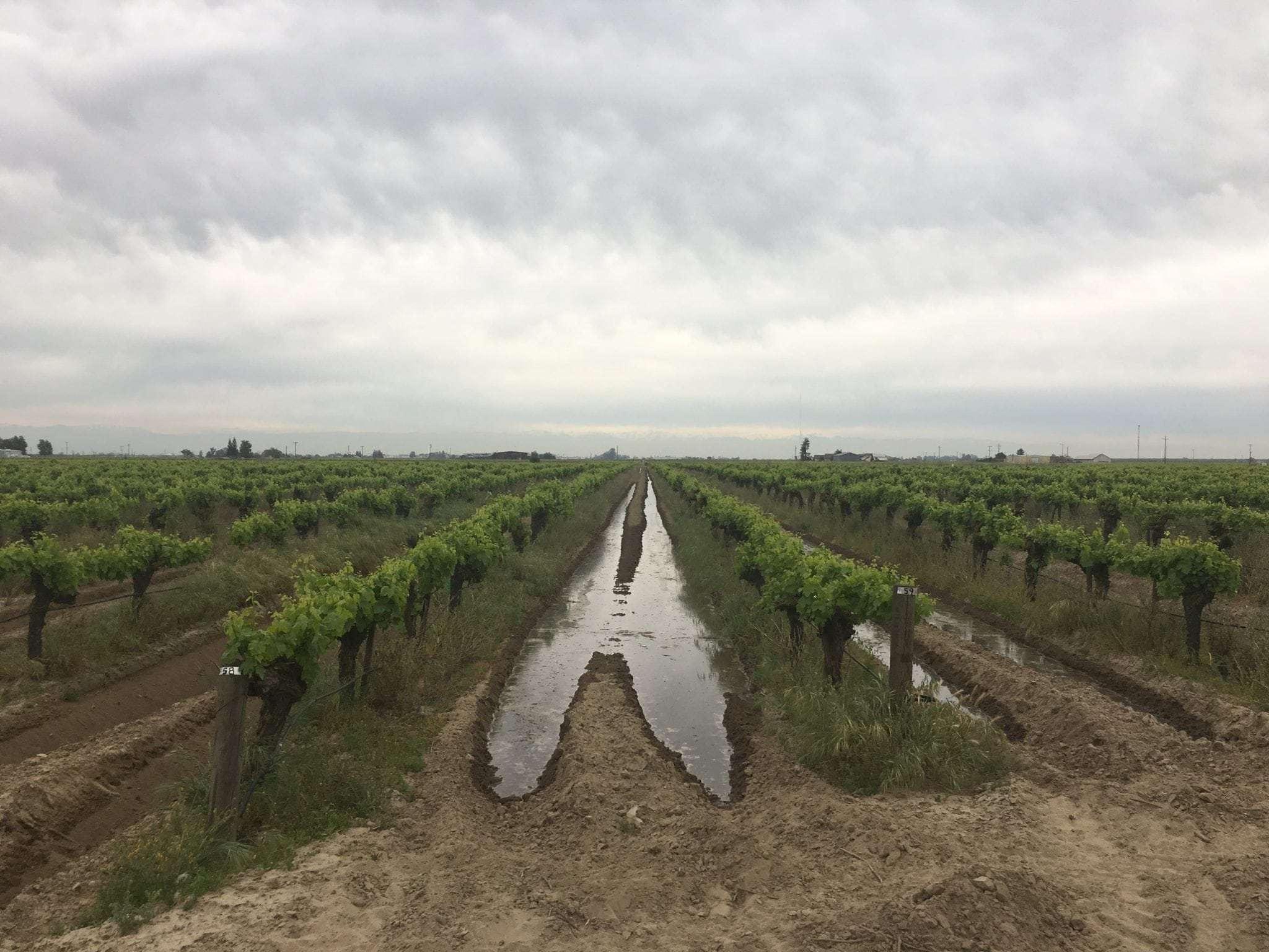39.03 Acre Vineyard, Home & Shop, Fresno