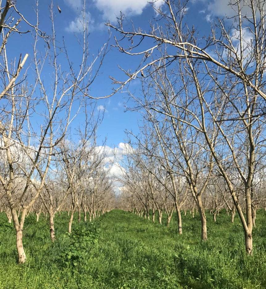 74.1 Acres Walnuts, Porterville