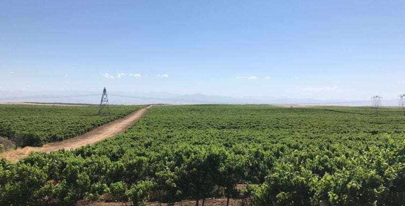 678.57 Acres Wine Vineyard & Open, Richgrove