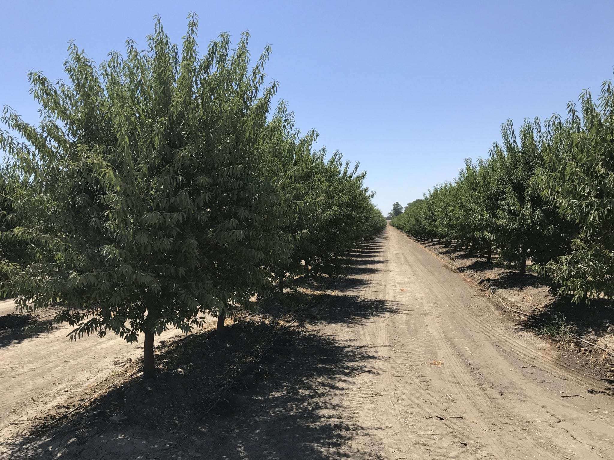 30.57 Acres Almonds, Visalia