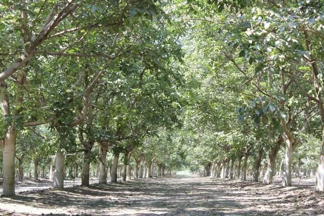 19.6 Acres Walnuts & Home, Tulare