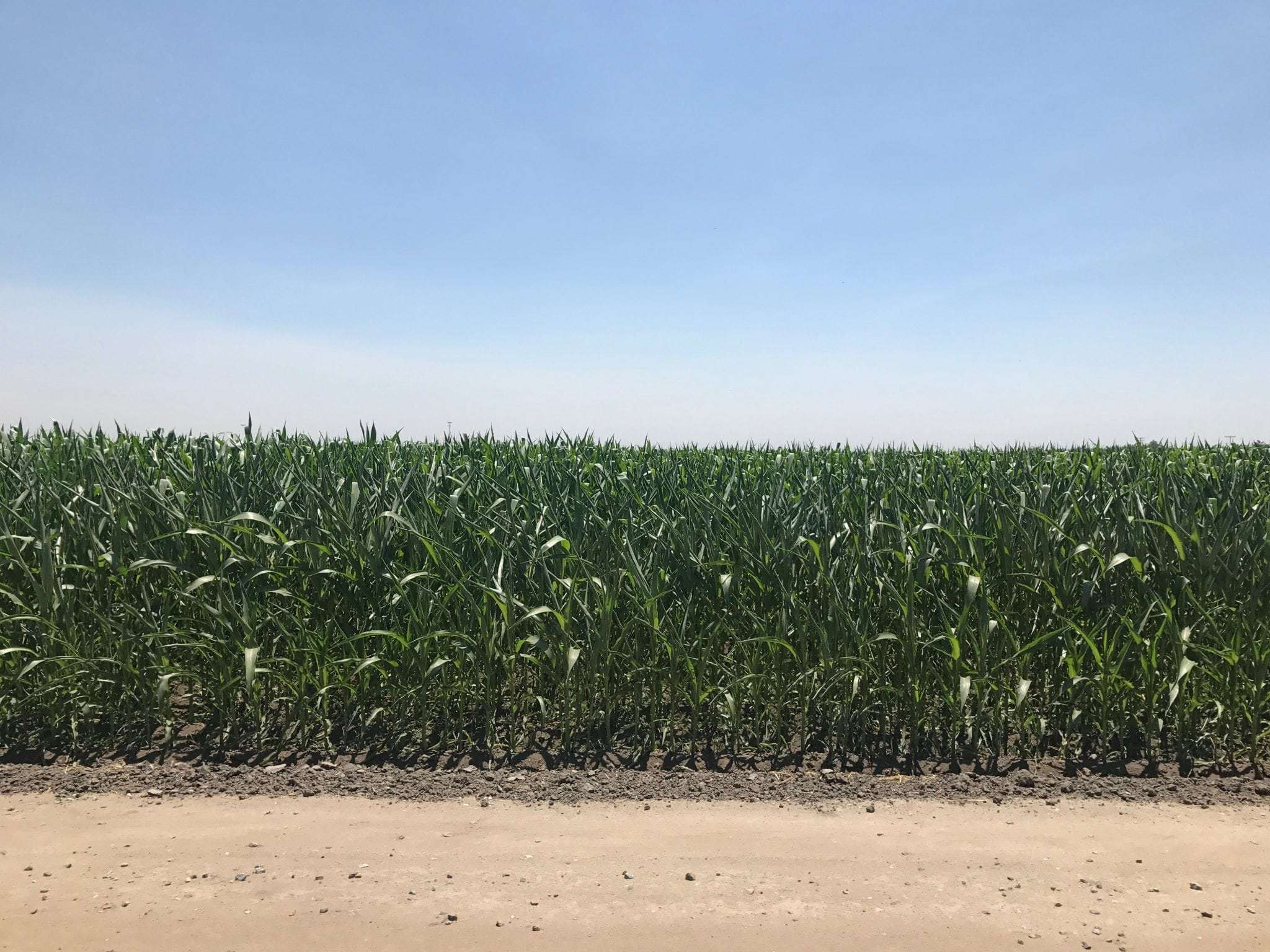 633.57 Acres Row Crop, Hanford