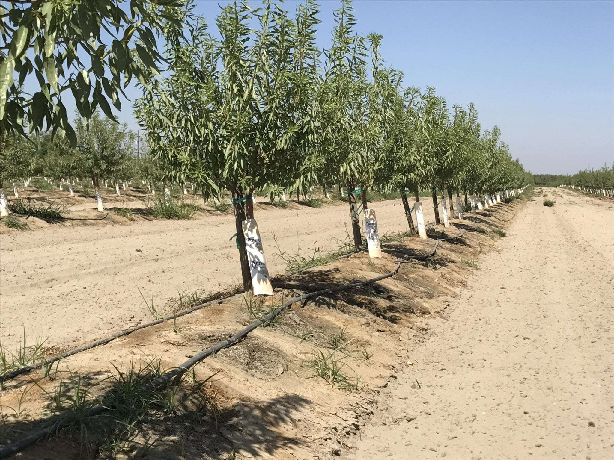 30.84 Acres Almonds and Rental, Caruthers