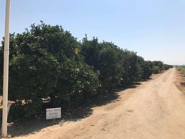 36.49 Acres Citrus, Visalia