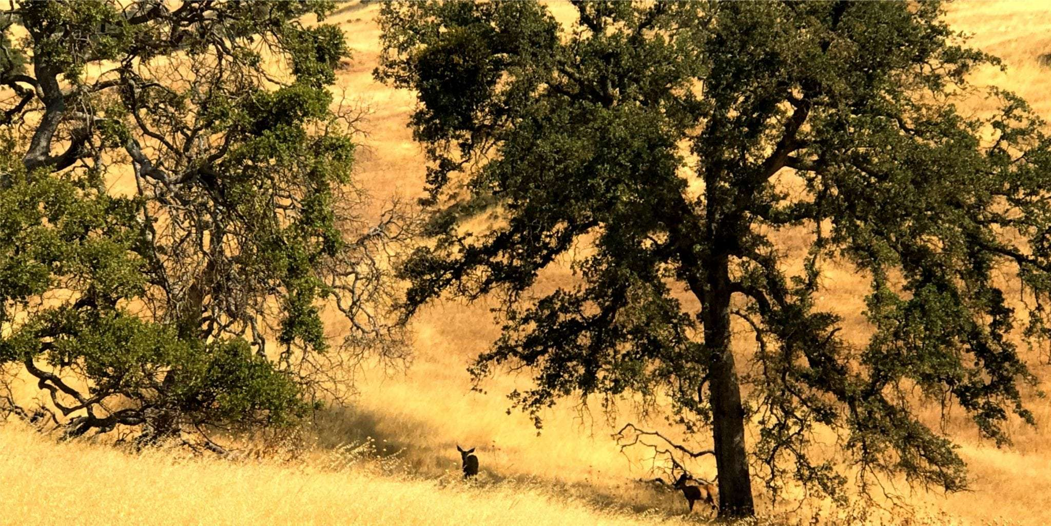 480 Ac. Grazing Land, Mariposa County