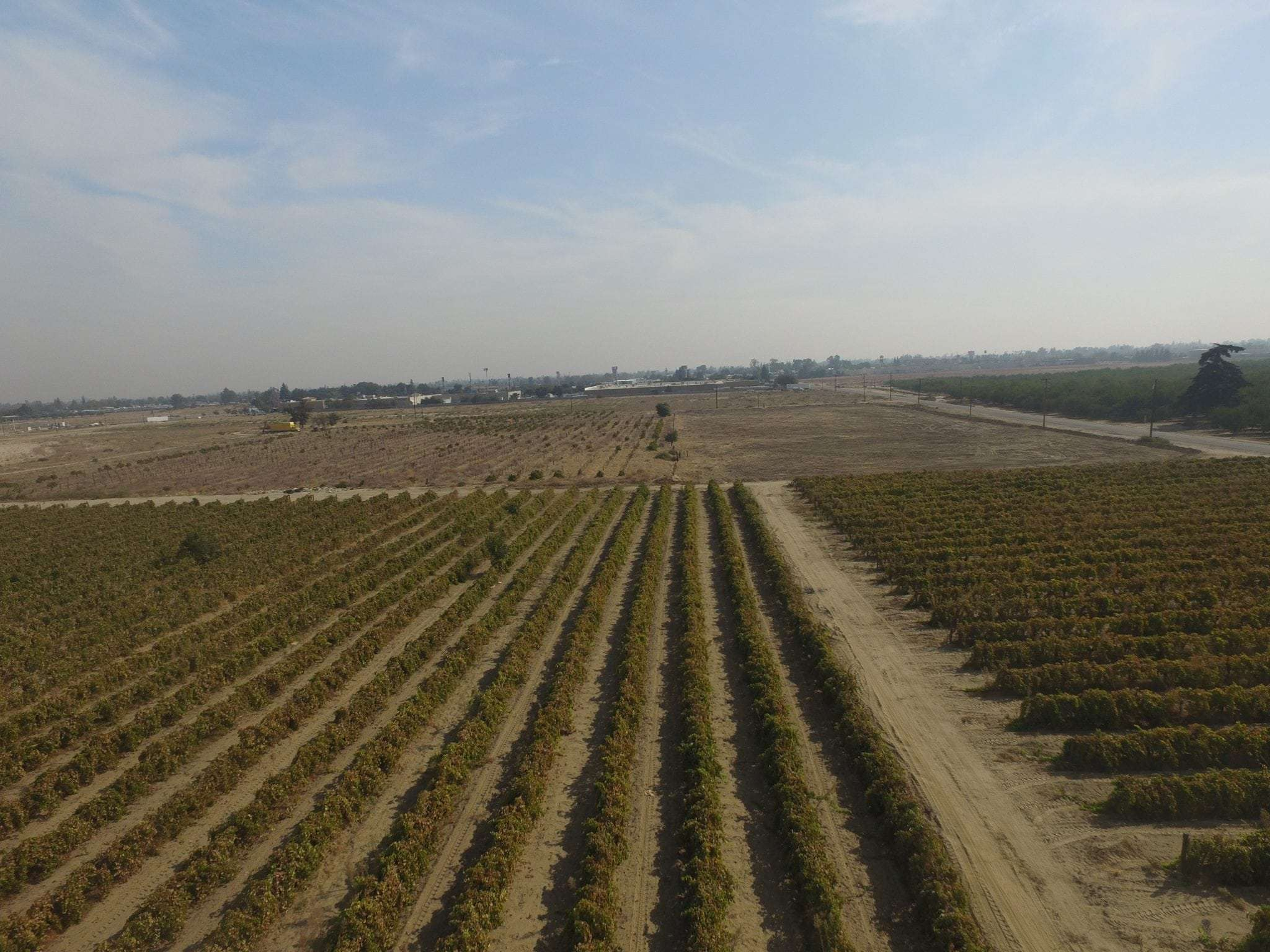 35.65 Acre Vineyard/Development Land, Selma