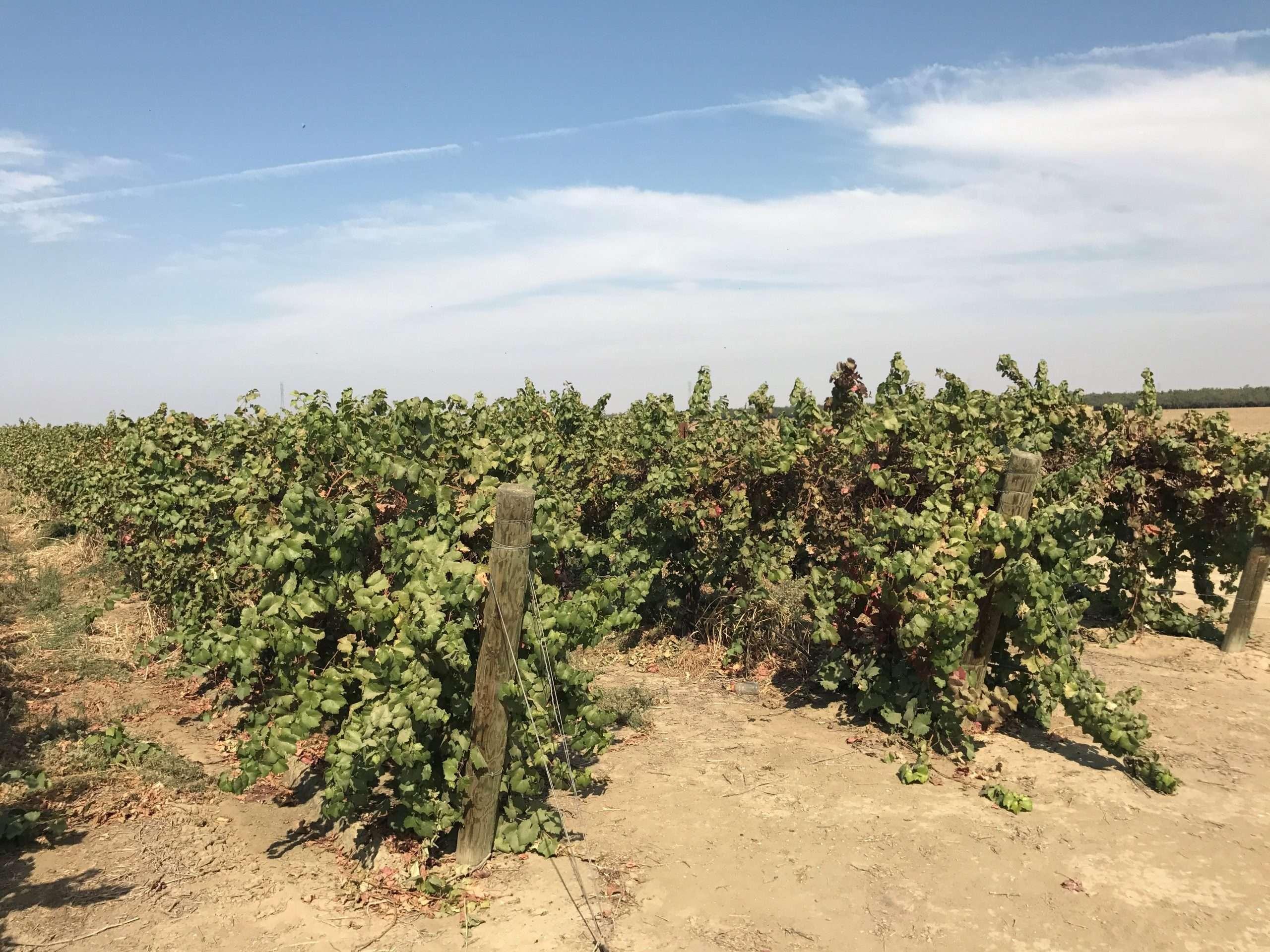 640.57 Ac. Vines, Walnuts & Open, Fresno County