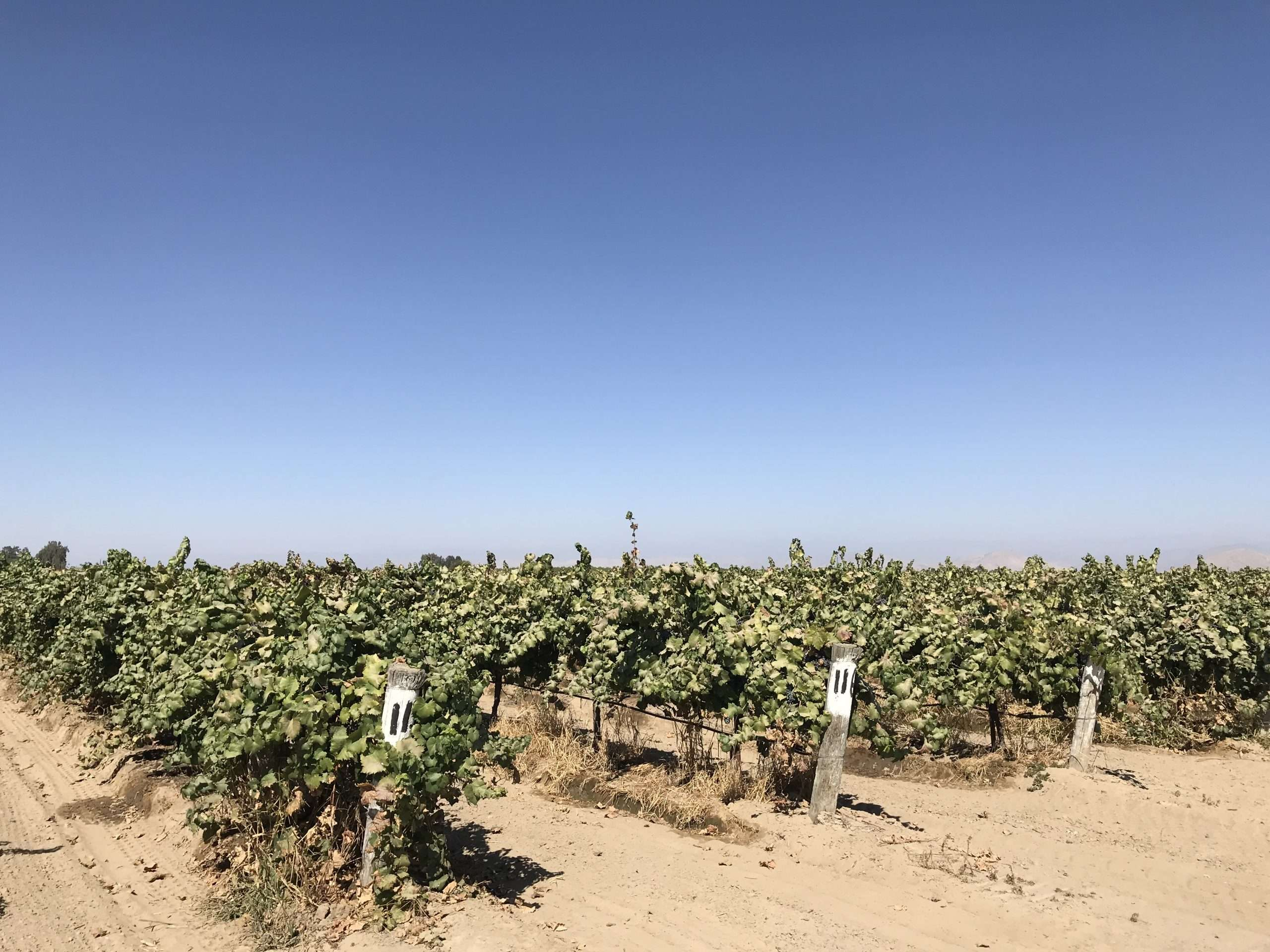 51.6 Acres Wine Grapes, Del Rey