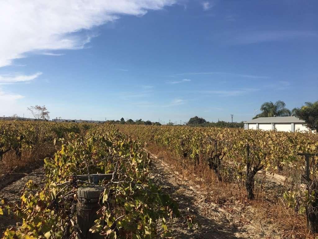 18.13 Acres Vineyard, Home & Shop/Bldg, Fresno
