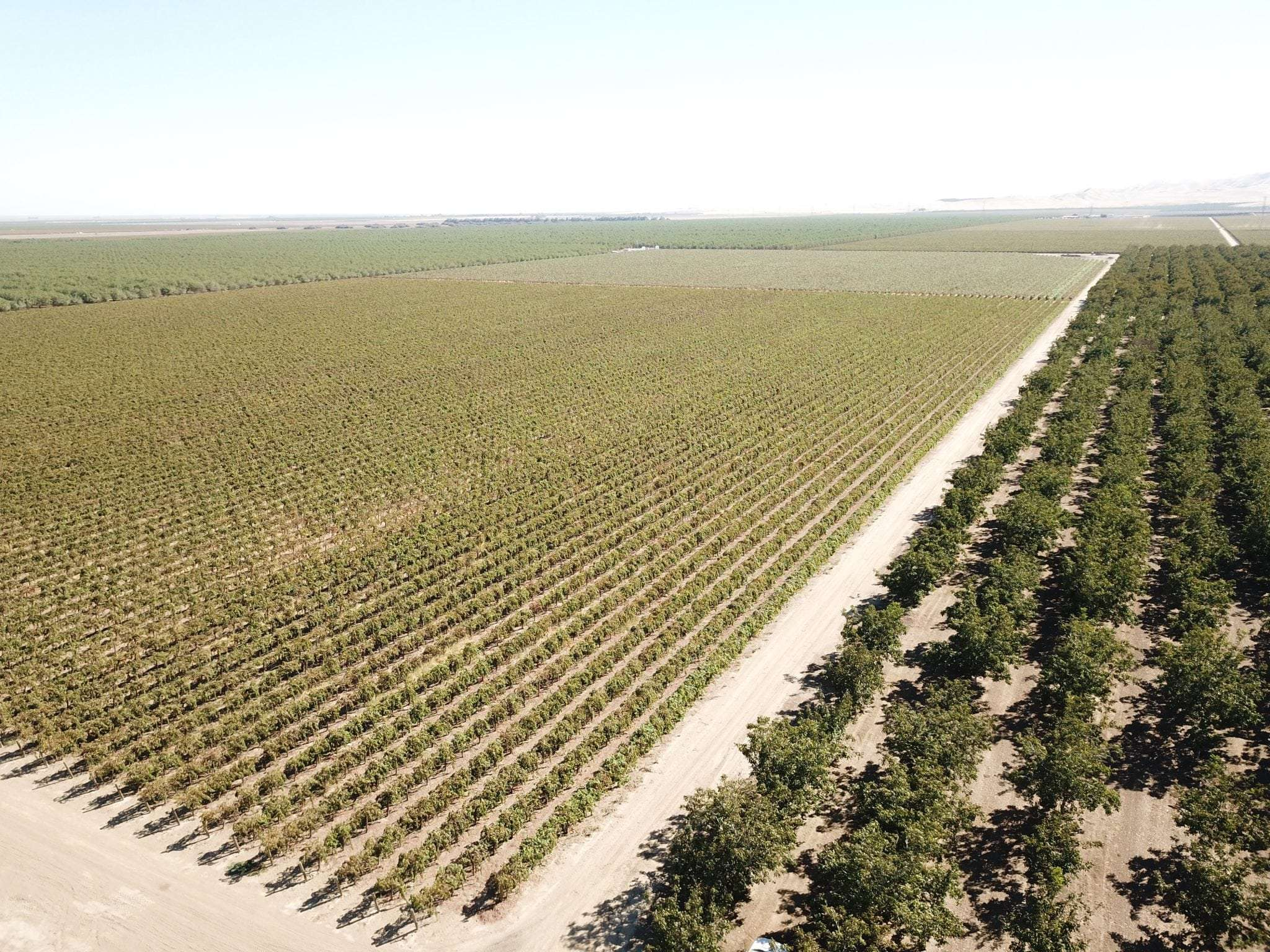 640.57 Ac. Open, Walnuts & Vines, Fresno County