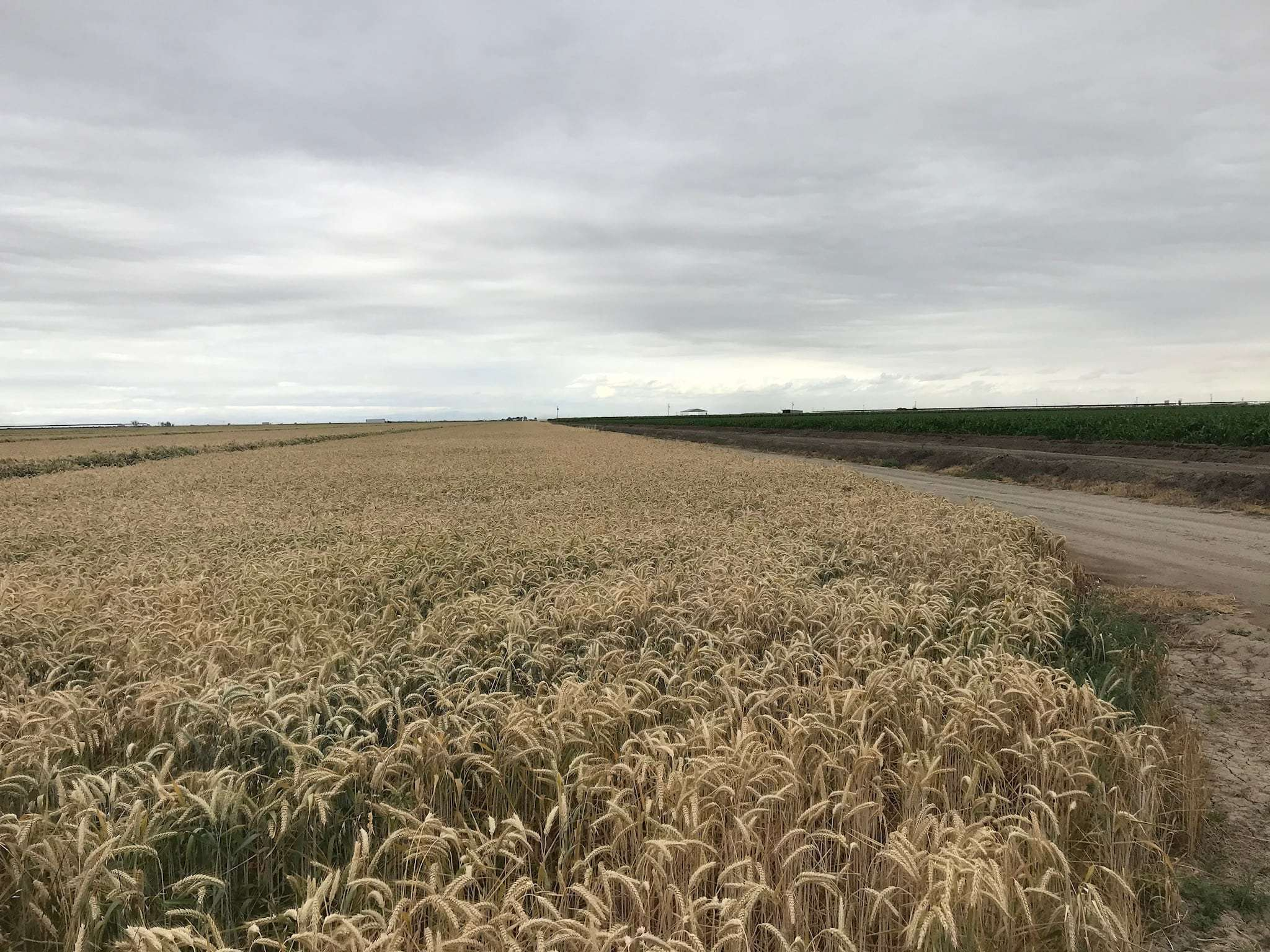159.25 Acres Open Land, Pixley