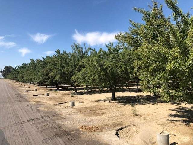 40 Ac. Almond Ranch, Kerman
