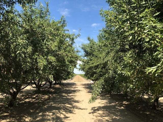 276.53 Ac. Almonds and Alfalfa, Kerman