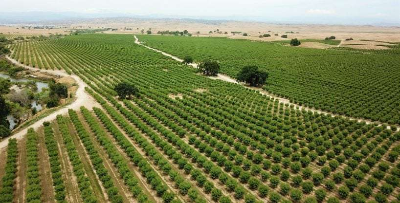 946 Ac. Almond Ranch Lease, Madera, CA
