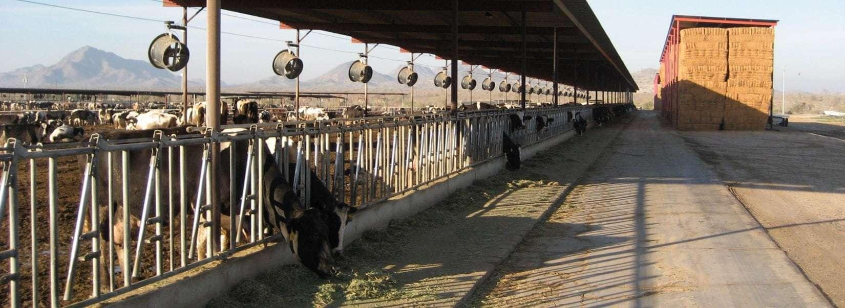 89 Ac. Dairy and Land, Buckeye, AZ
