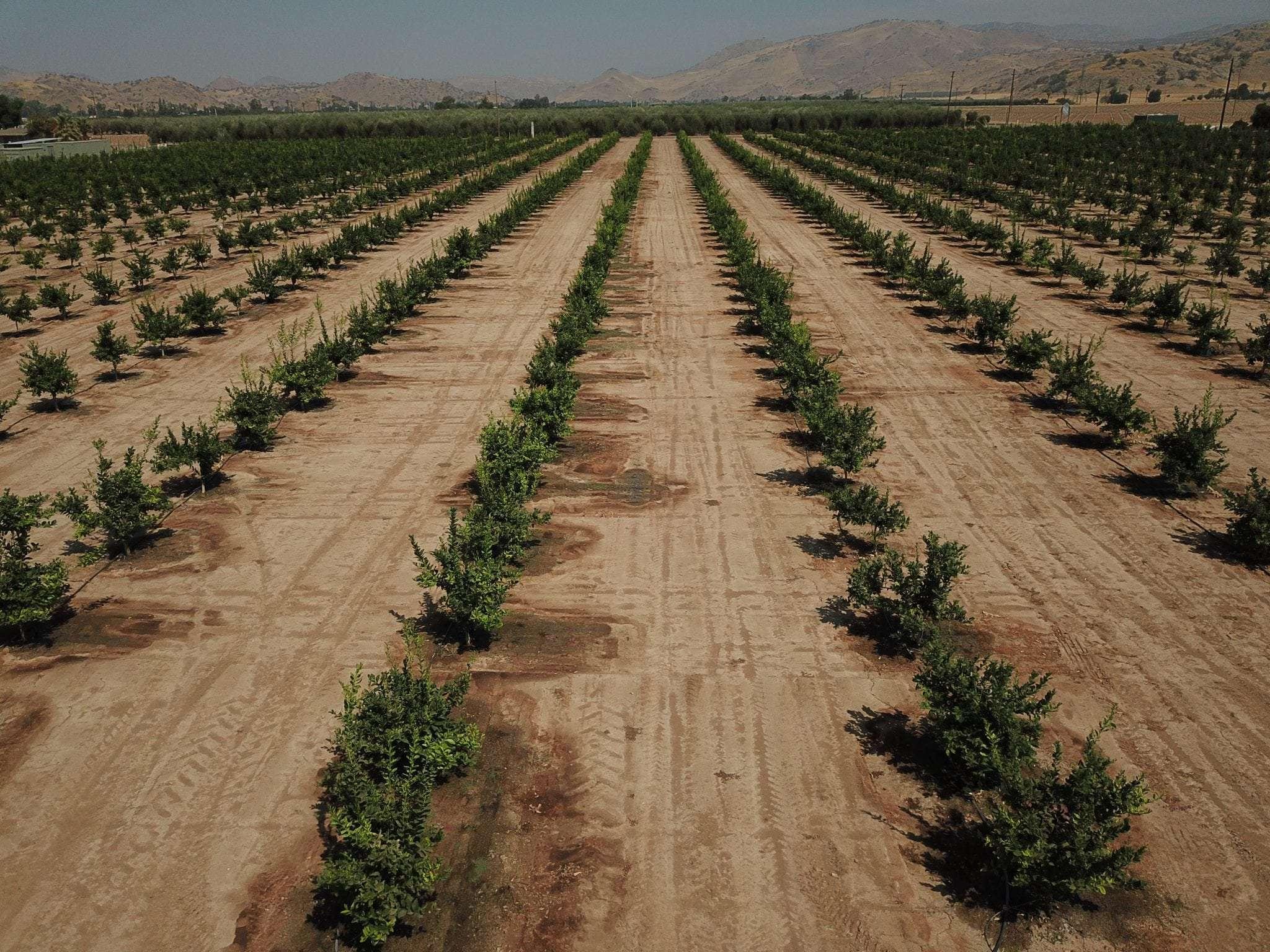 20 Acres Lemons, Woodlake, CA
