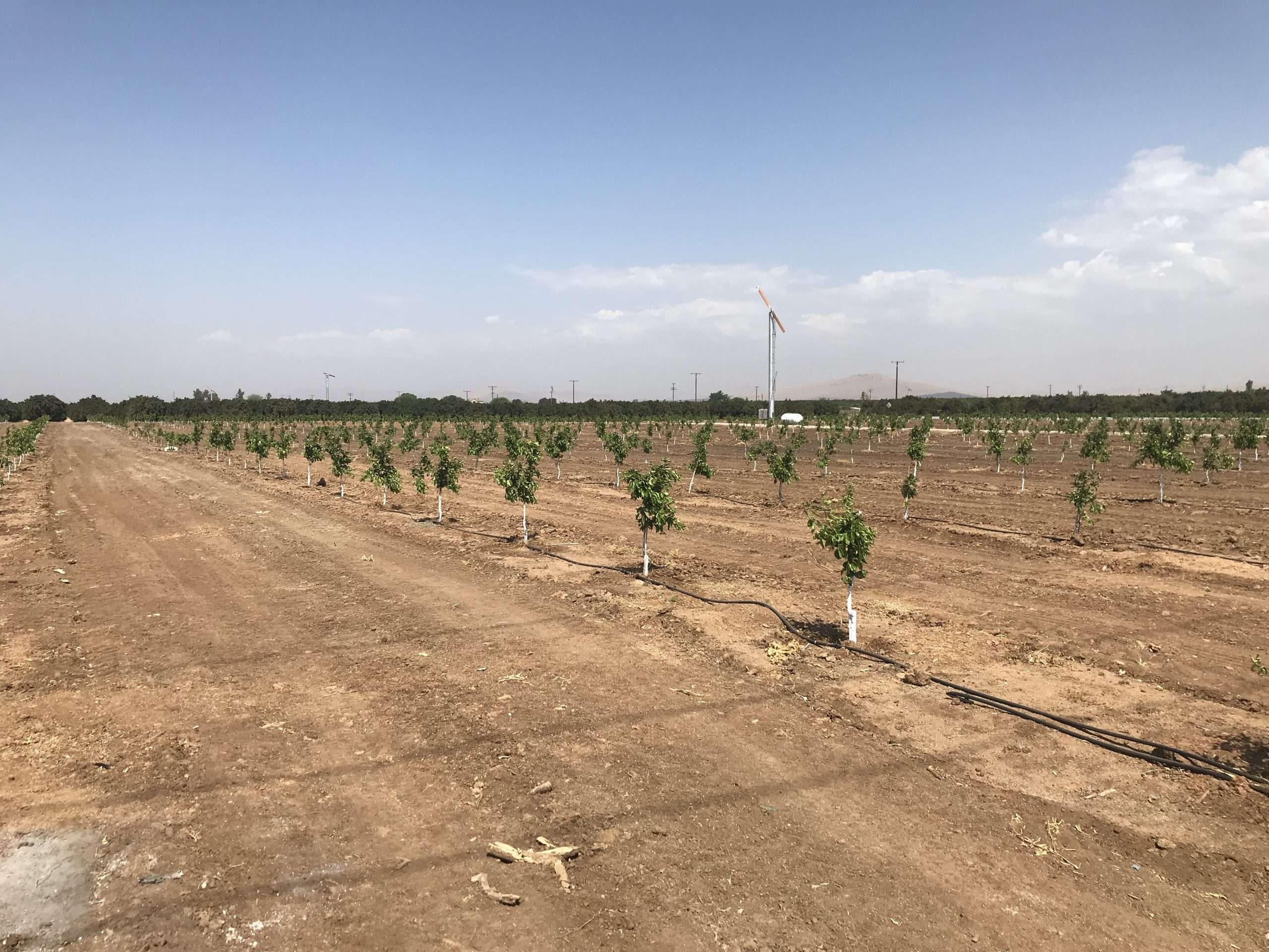+/-32.32 acres Mandarins & Navels Terra Bella