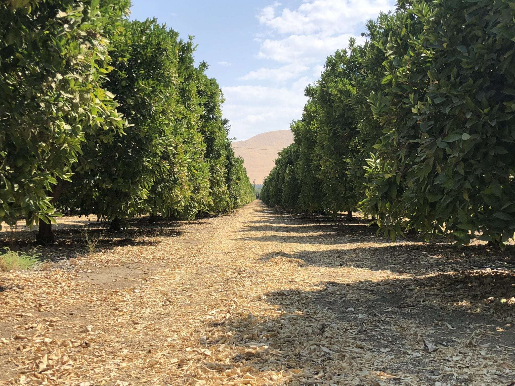 35 Acres Navels, Woodlake CA