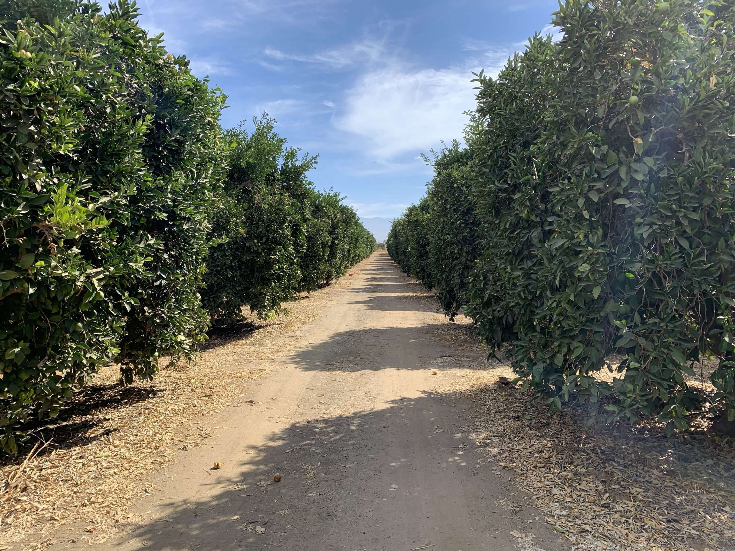 37.6 Acres Porterville Citrus