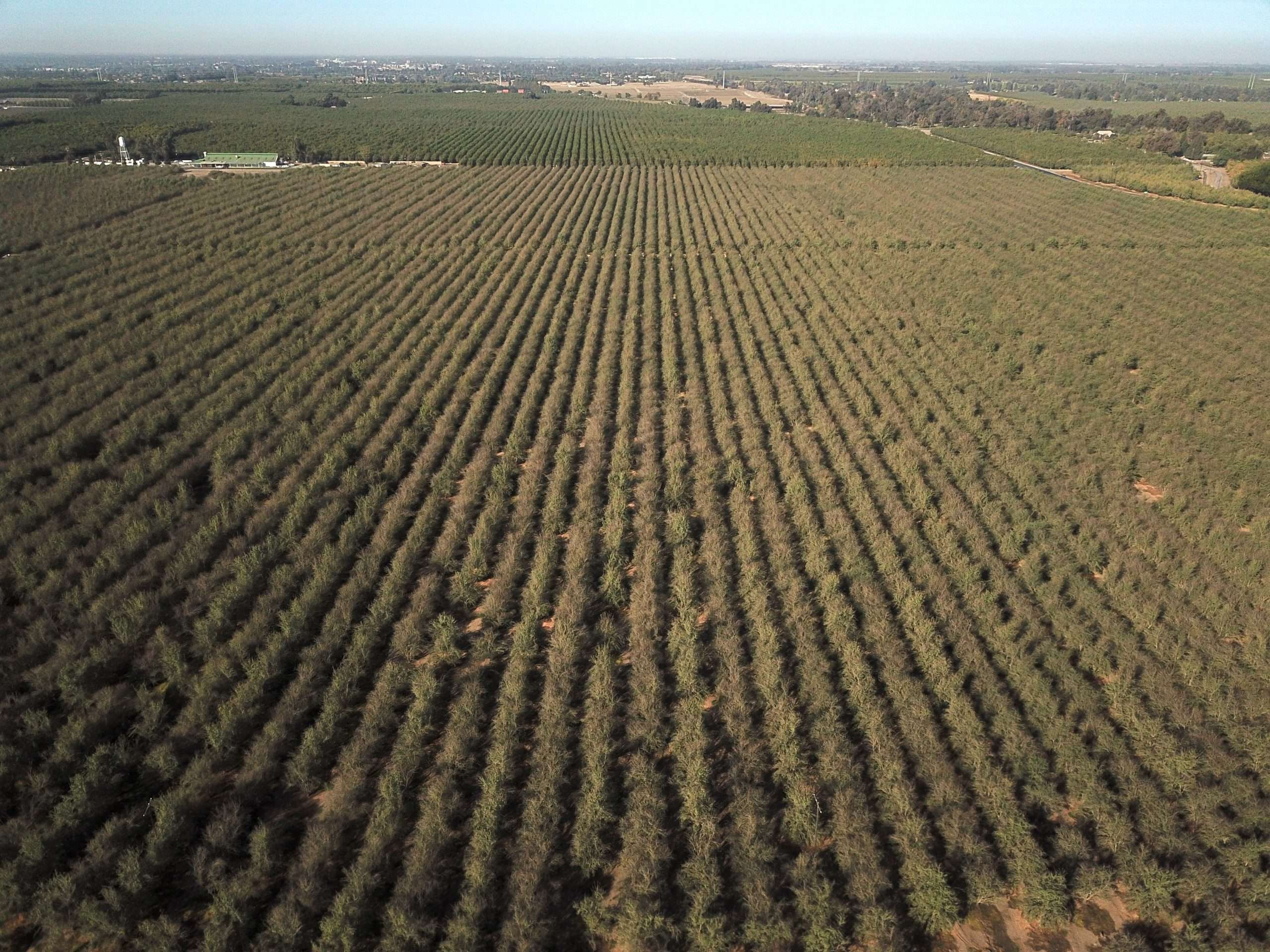 174.7 Acres Almonds, Visalia CA
