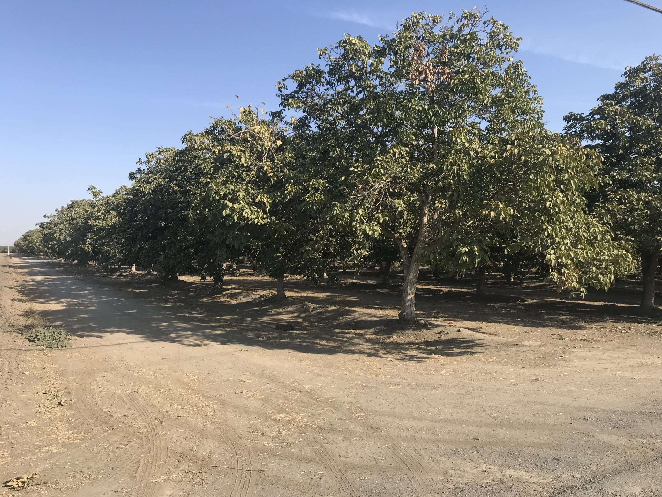 50 Ac. Walnuts, House & Shop, Tulare County