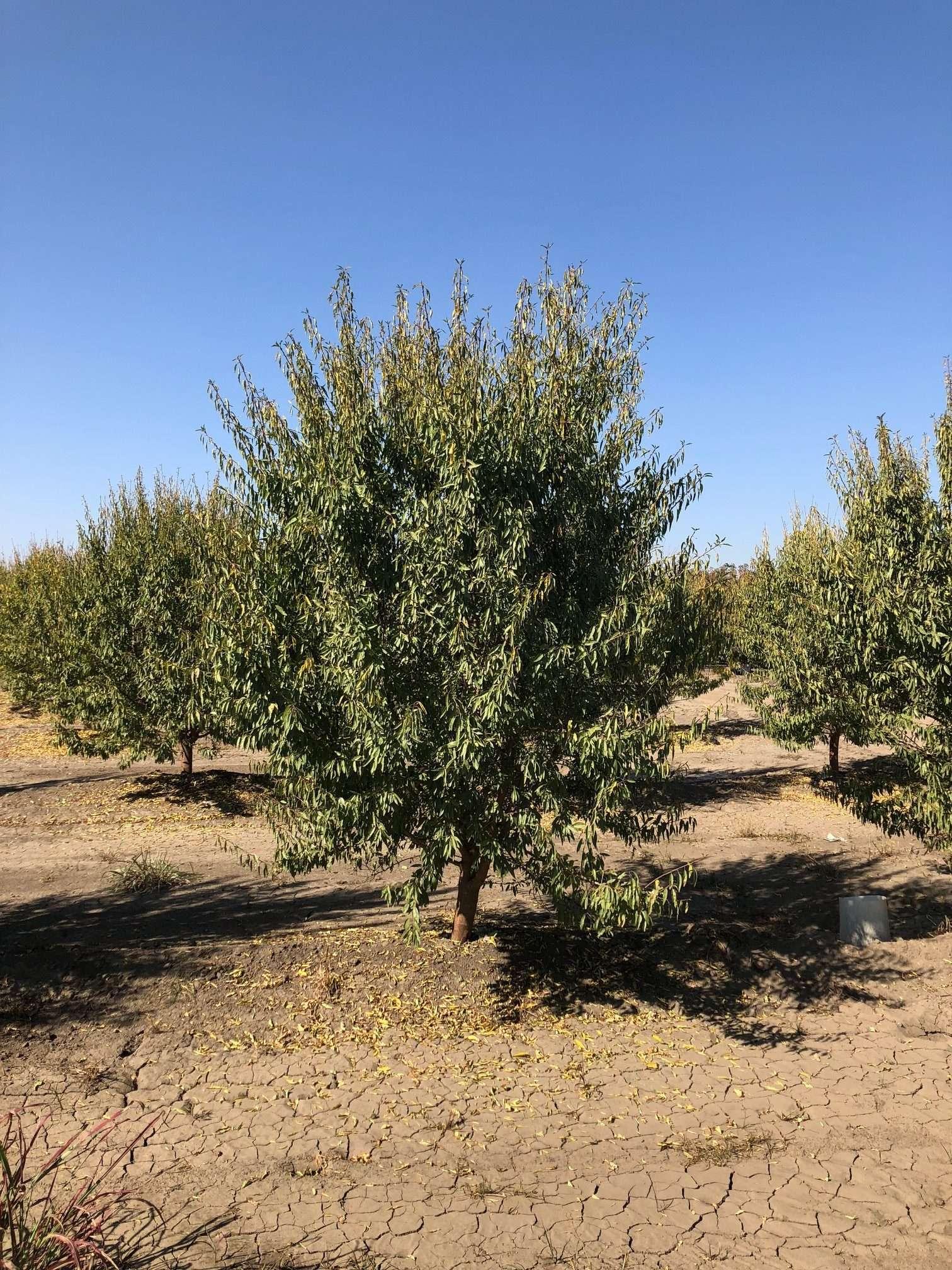 216.29 Ac. Almonds, Walnuts & Cherries