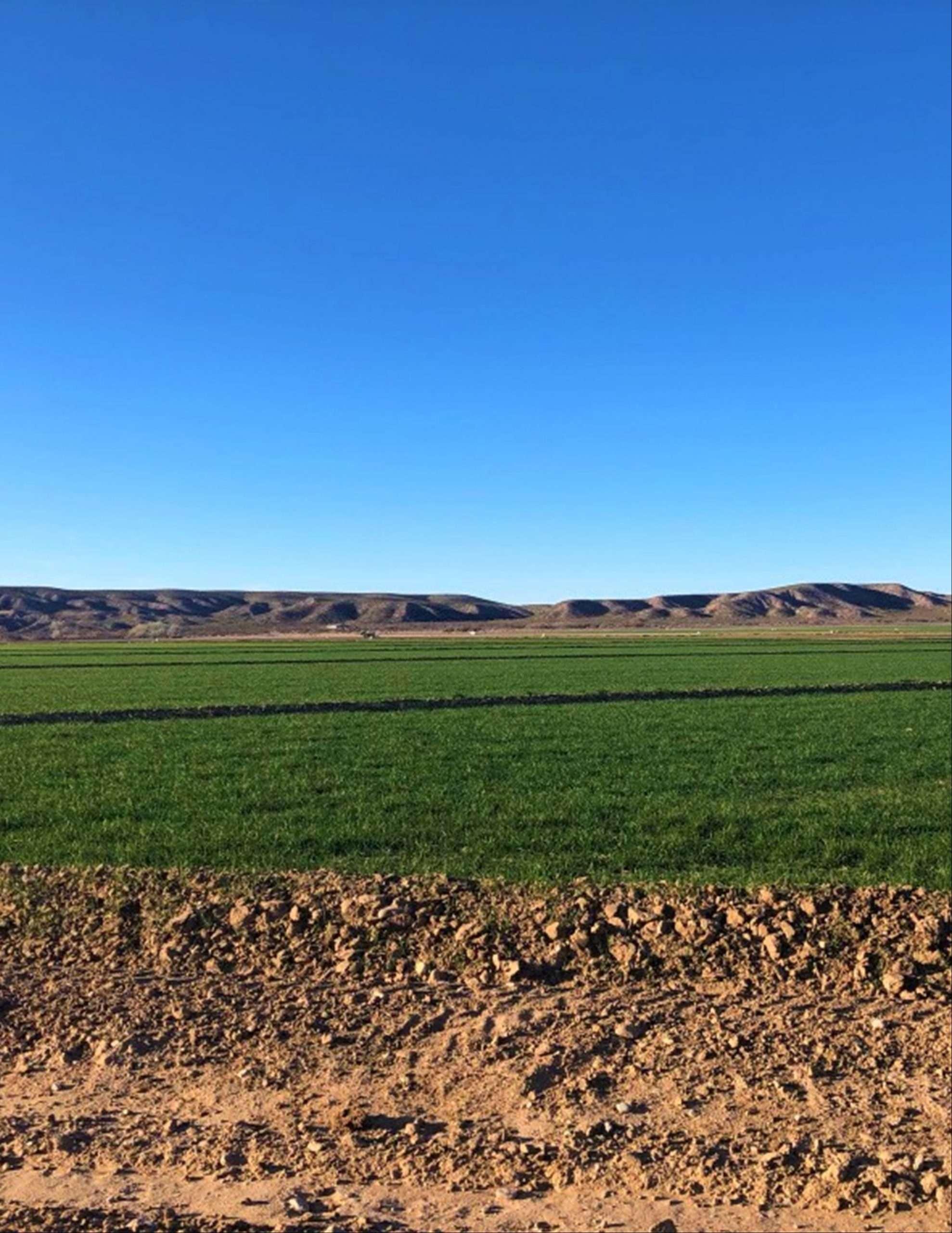Loma Parda Dairy, NM