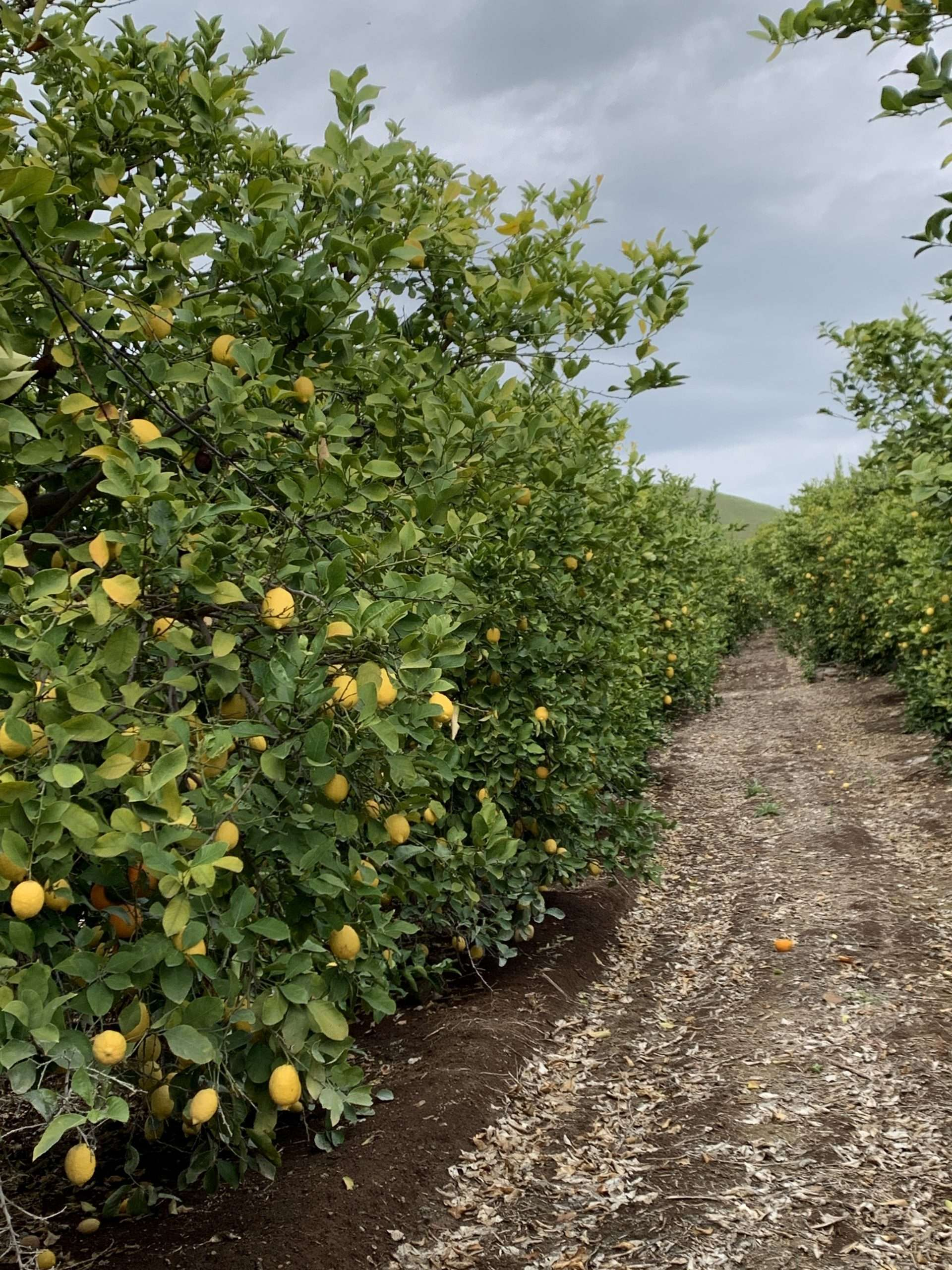40.5 Acres Citrus, Porterville, CA