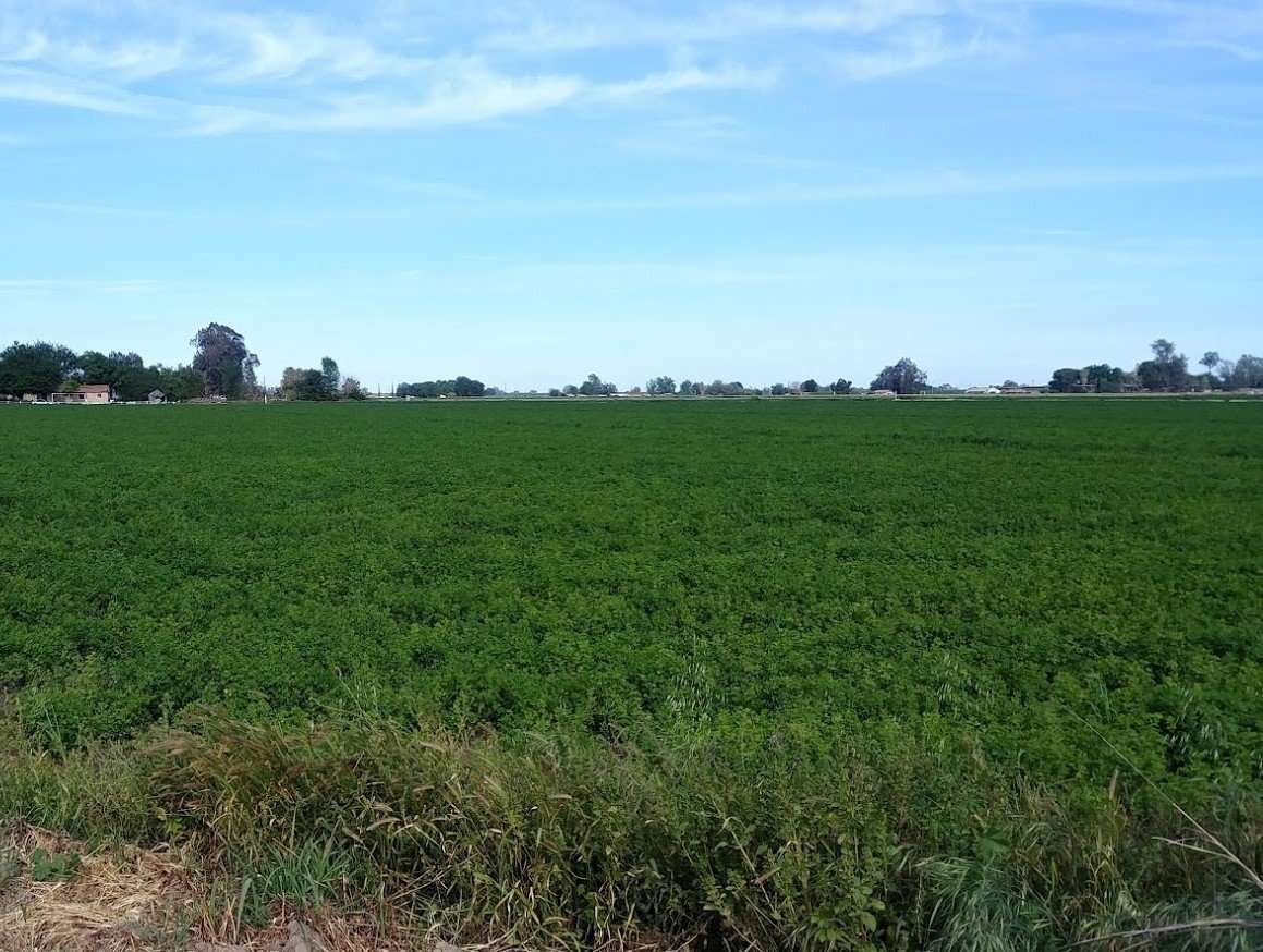 114.41 Ac. Open Land, Lemoore