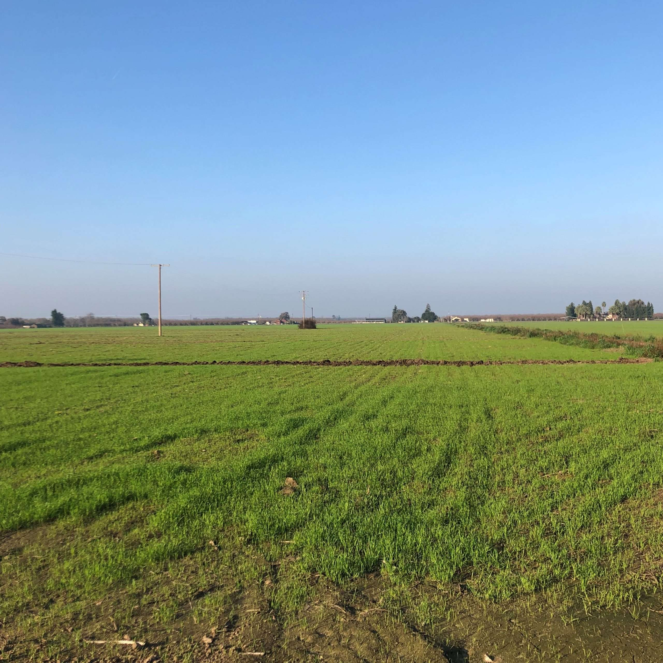 155 Ac. Open Ground, Hanford