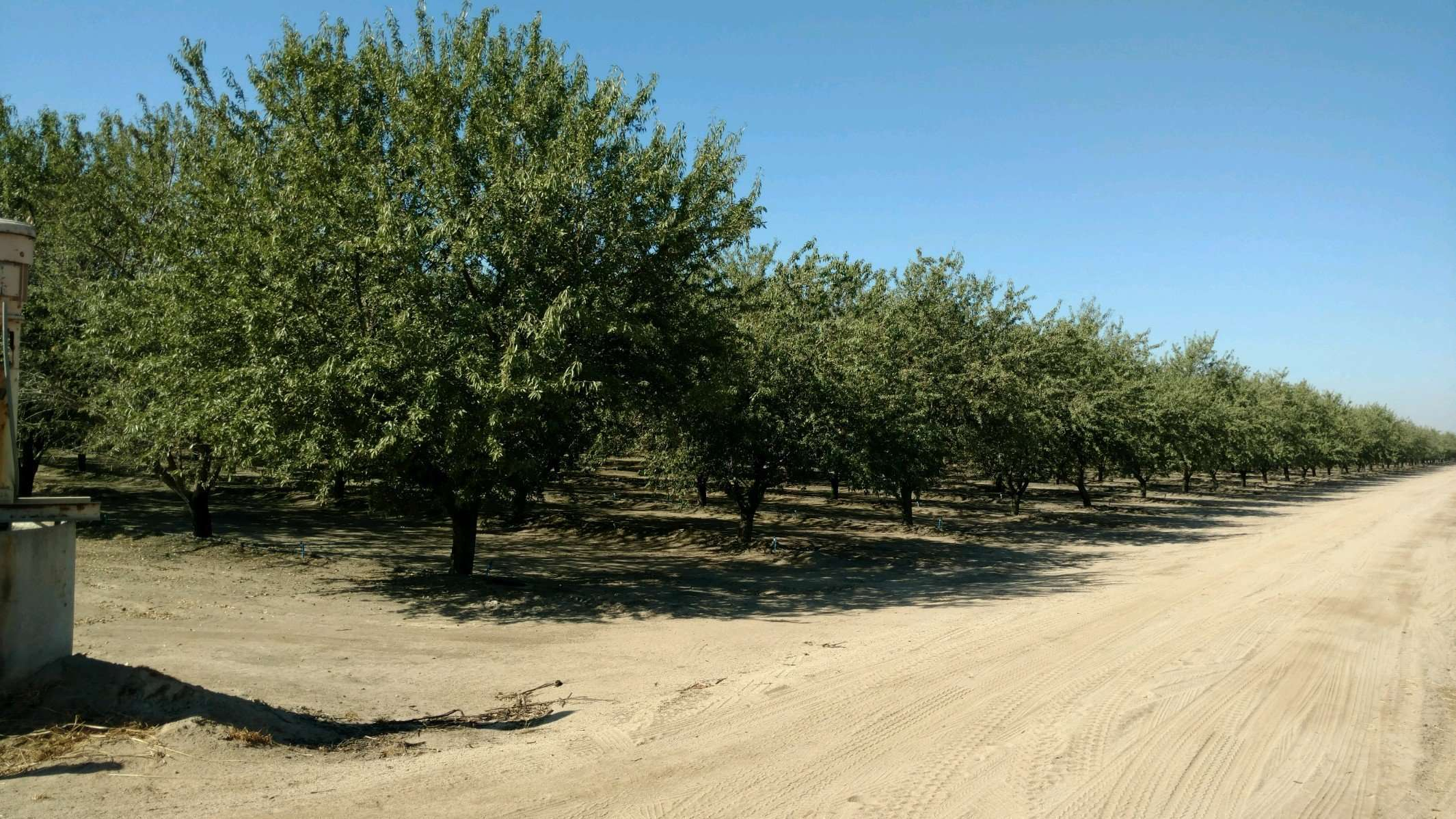 148.84 Ac. Almonds and Open Land