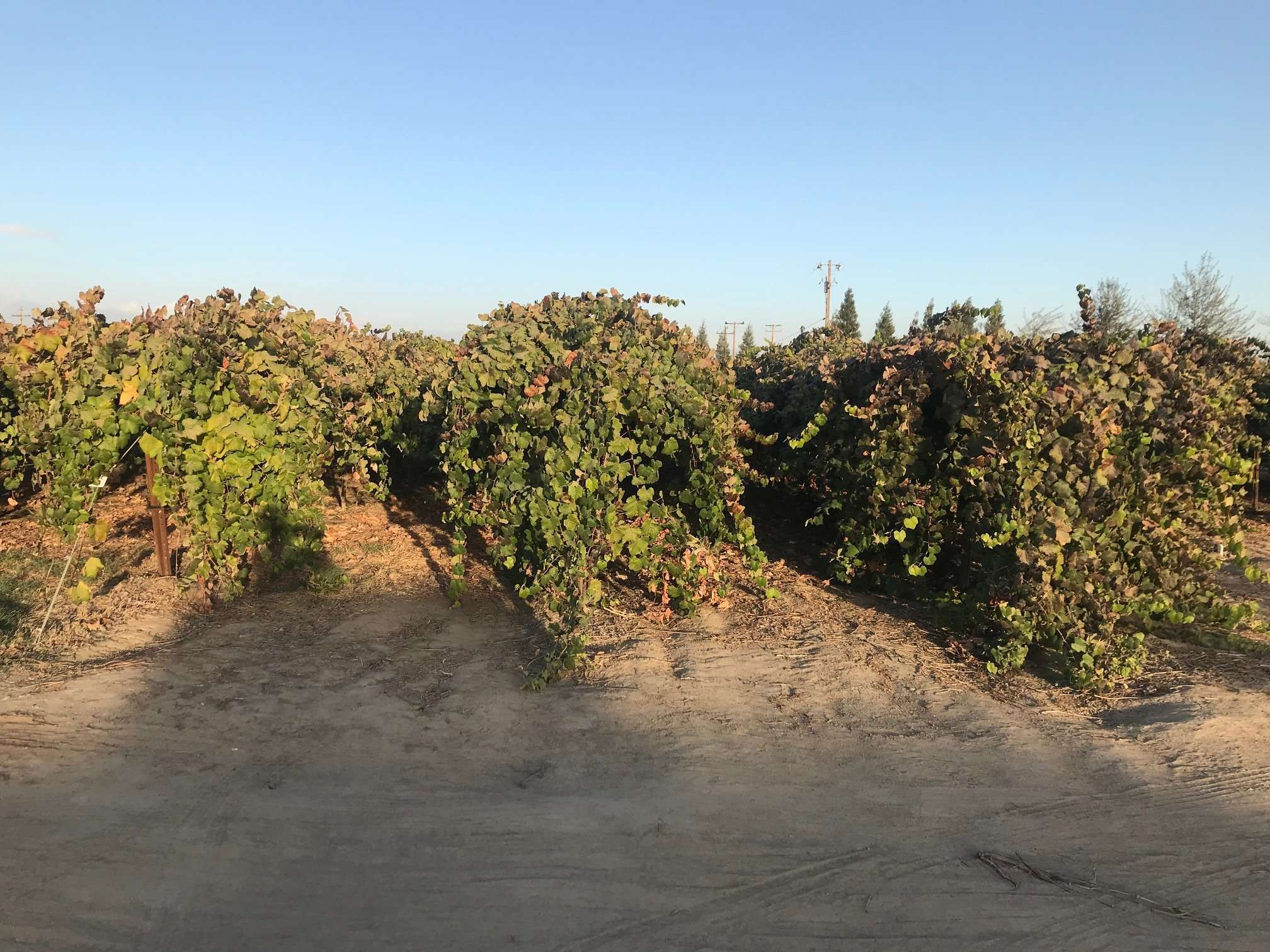 22.7 Ac. Vines, Home & Kings River Frontage, Reedley