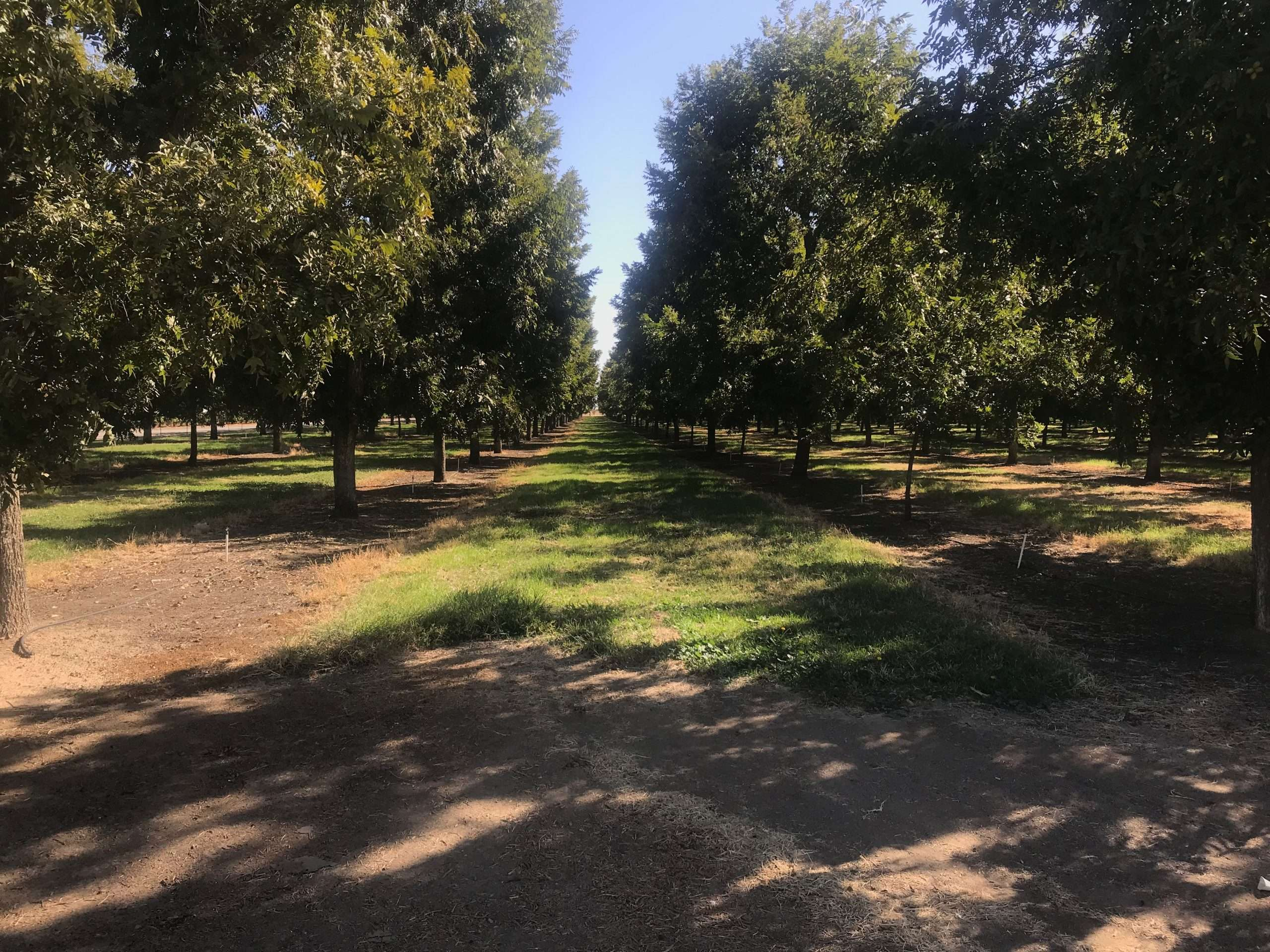 590.37 Ac. Pecan Orchard, Kern County
