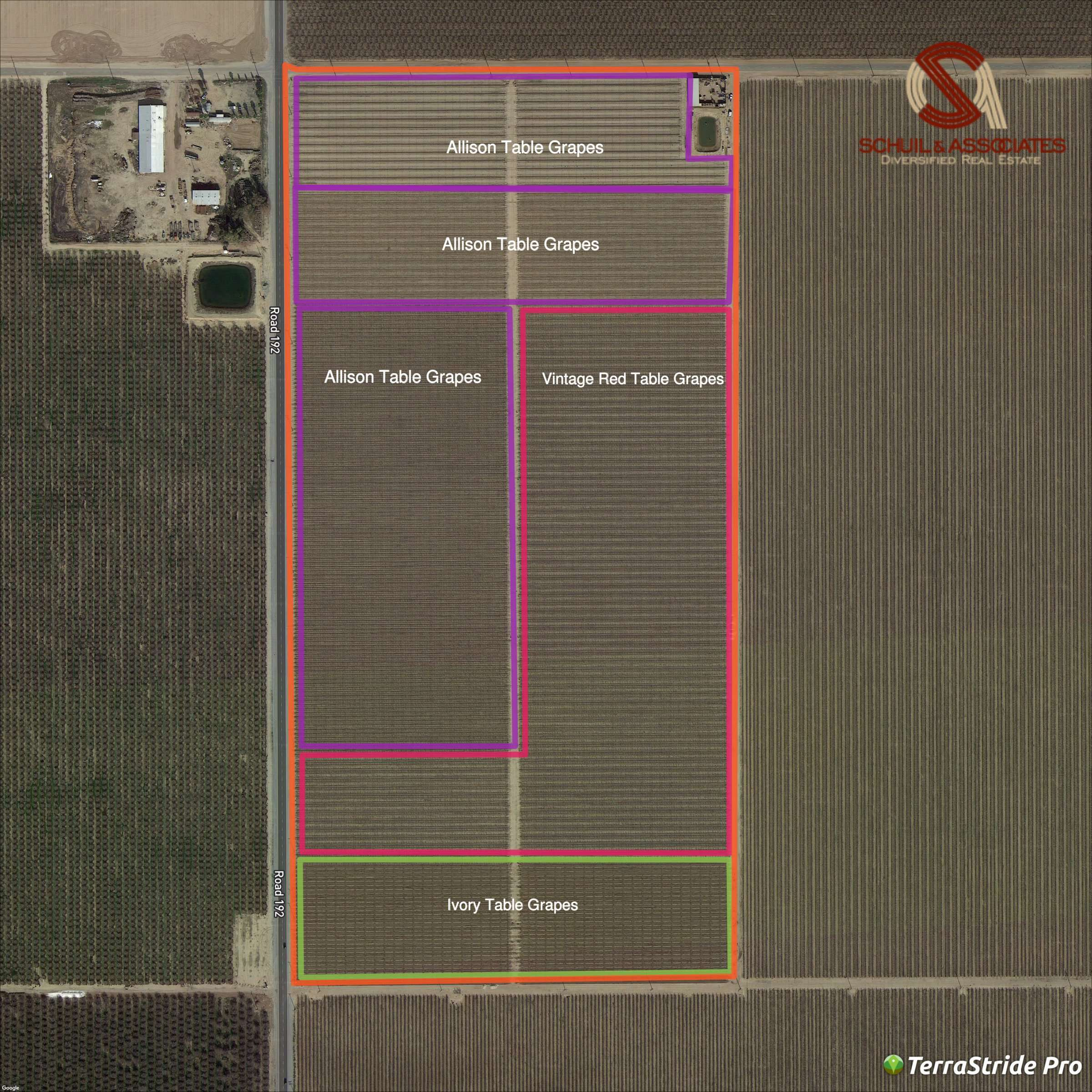77.15 Ac. Table Grape Ranch